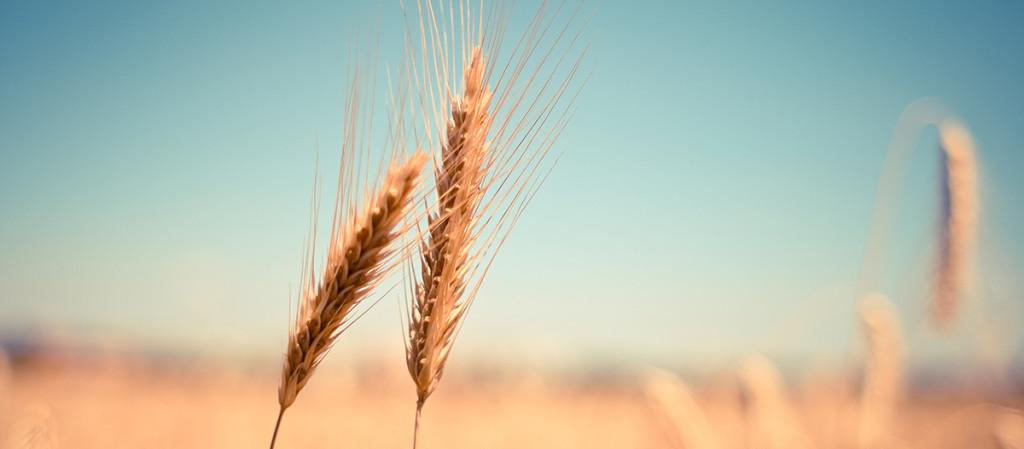 servizi-impresa-agricola
