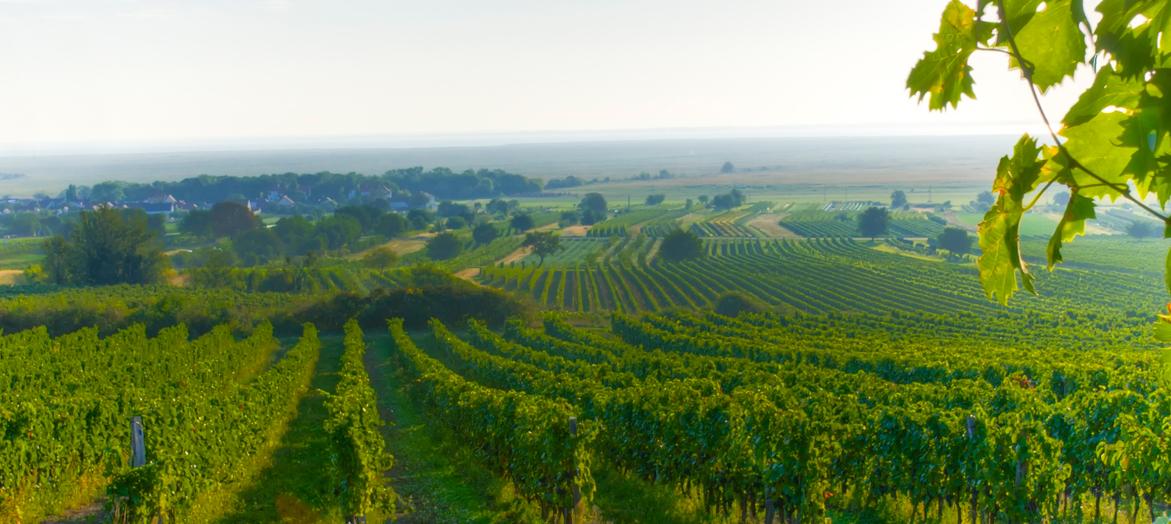 vitivinicolo